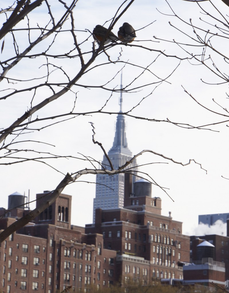 Robins + Empire State Buildling: sittin' on top of the world
